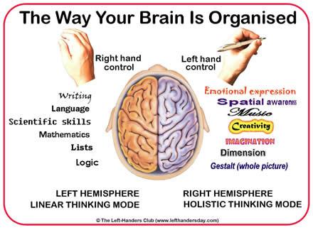 left hand brain